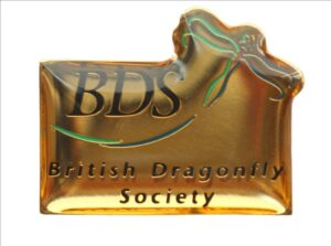 BDS logo pin badge
