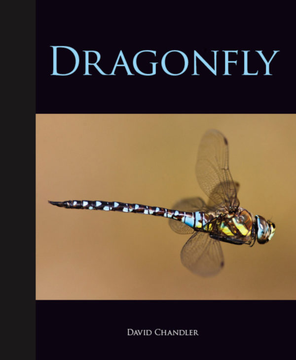 Dragonfly cover 280212.jpg