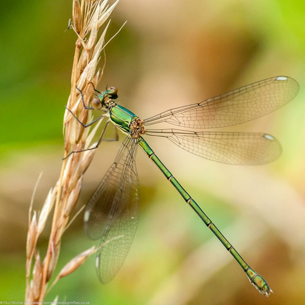 Willow Emerald Watch
