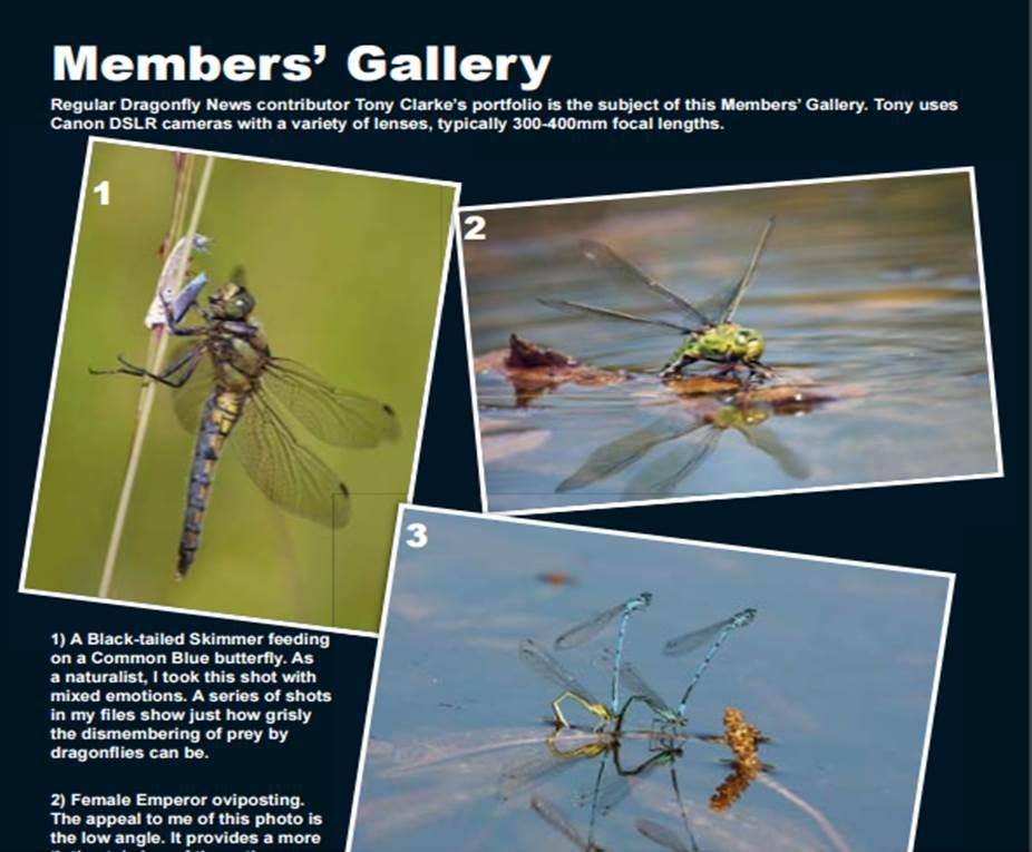 members gallery