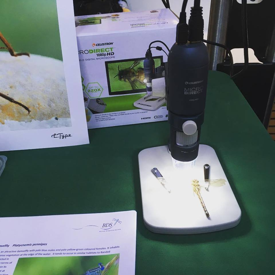 Microscope and dragonfly FM 2018
