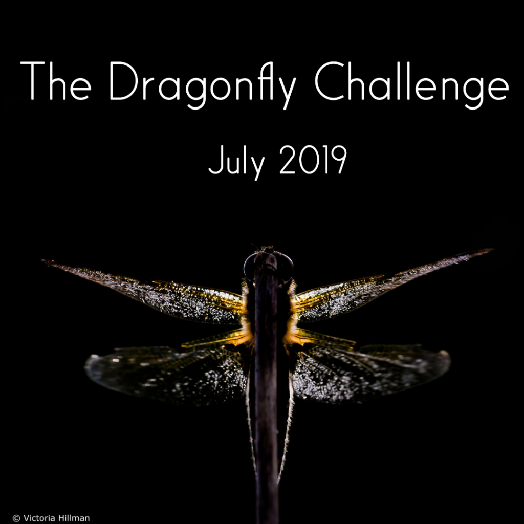 Dragonfly Challenge Coming Soon!