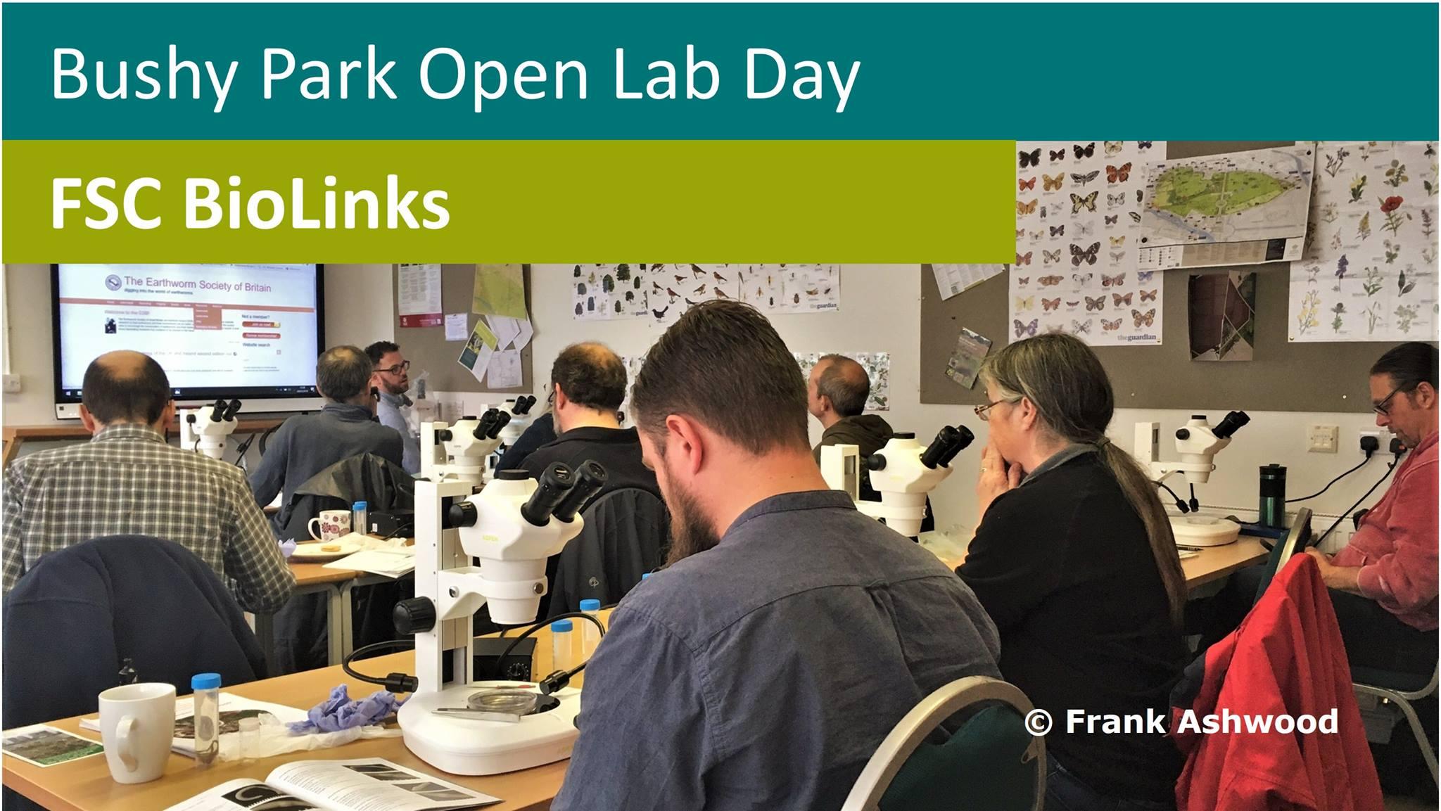 Bushy Park Open Lab Day British Dragonfly Society