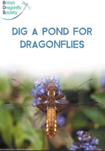 Dig a pond for dragonflies