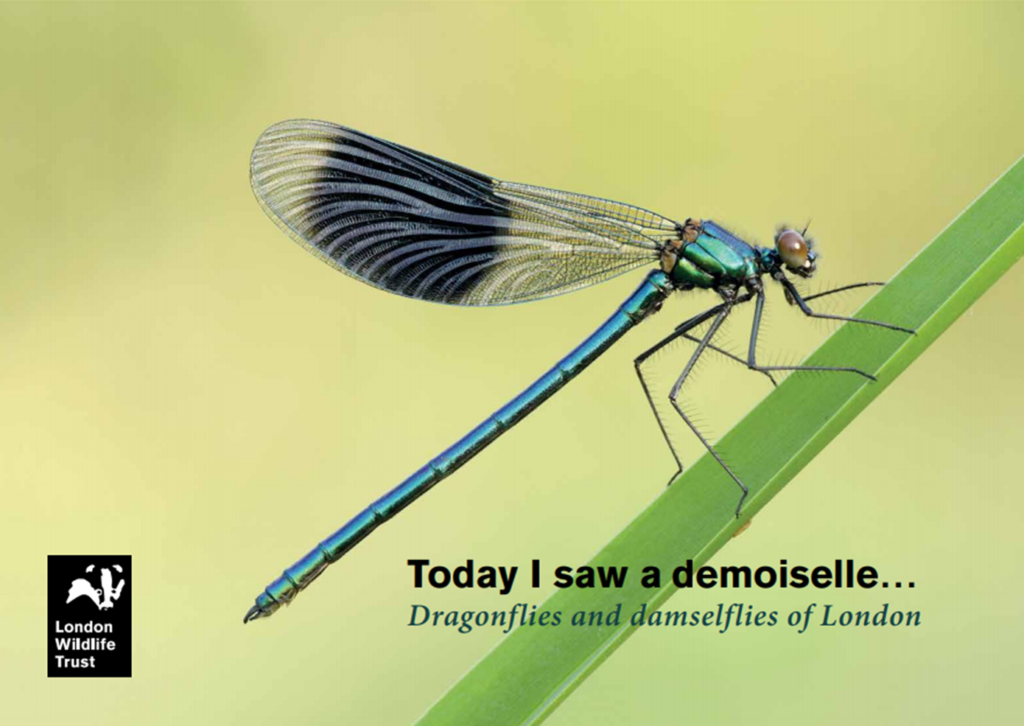 Order your guide to London's dragonflies and damselflies