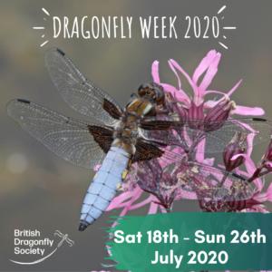 Dragonfly Week