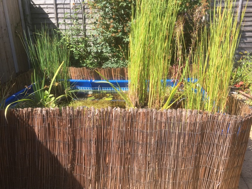 Pond Ponderings: First Summer of a Raised Suburban Pond in Worcestershire