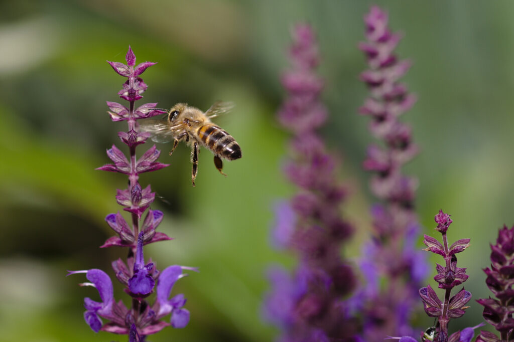 Neonicotinoid pesticide will not be used in England in 2021