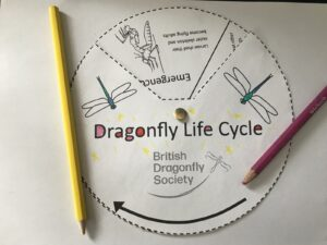 Life cycle spinner activity